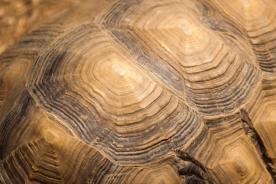 large-tortoise-bg