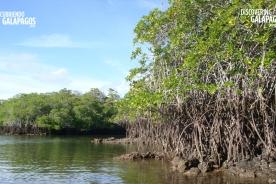 Mangrove BKG (©Anna Spear) - 1280x720