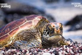 Turtle BKG (©Claude Lester) - 1280x720