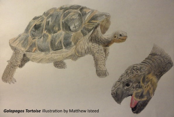 TortoiseSketch