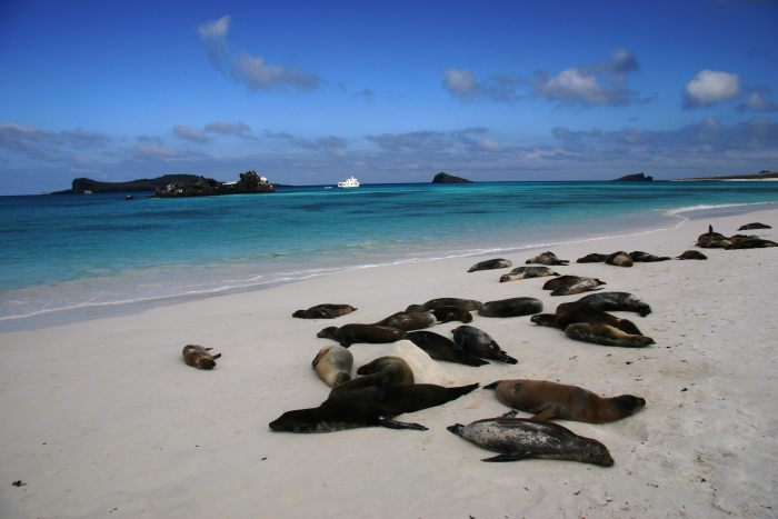 Galpagos Places: Beach and Sea Lions © Vanessa Green