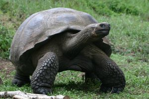 Tortoise © Vanessa Horwell