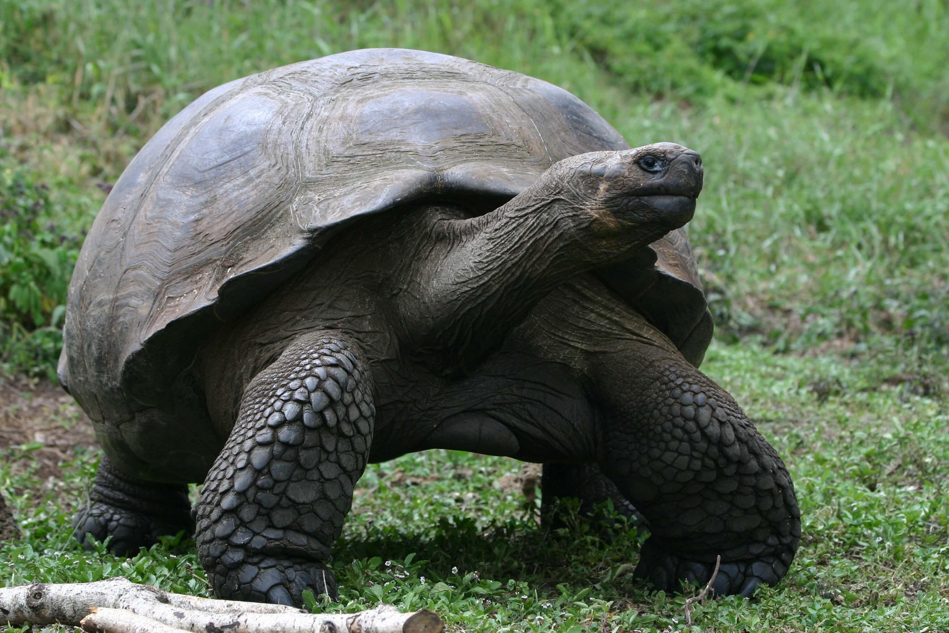 Tortoise by Vanessa Horwell
